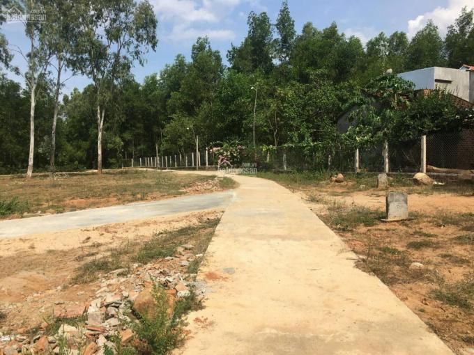 Cần bán đất ở trồng rừng, gần chợ, khu vực đông dân cư, đi lại thuận tiện. Cách QL 19B 400m ảnh 0