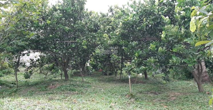 Bán đất vườn mặt tiền 33.4m, Tỉnh Lộ 851, ngã 5 Tân Thành, xã Long Hậu, Lai Vung ảnh 0