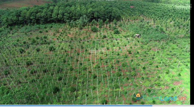 Bán đất huyện Chư Prông, Gia Lai. Diện tích 2.2ha ảnh 0