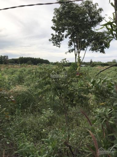 Bán đất NN + ít thổ cư hẻm Triệu Quang Phục - Dương Kỳ Hiệp, LH 0932696699 ảnh 0