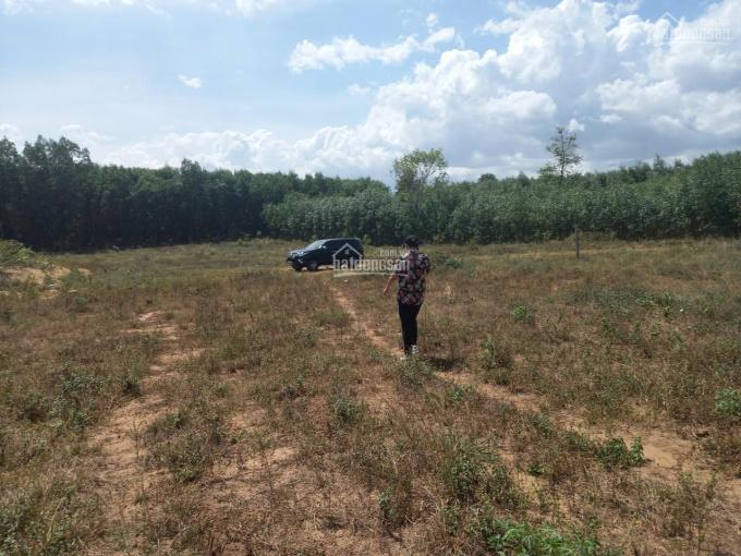 Bán 2 mẫu đất, xã Phước Bình, Long Thành, ĐN, giá chỉ 850 triệu = 1 Sào ảnh 0