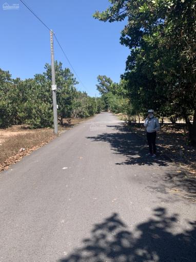 Cần bán đất mặt tiền đường nhựa xã An Viễn, Trảng Bom, Đồng Nai ảnh 0
