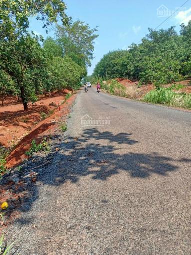 Chủ gửi bán 2 lô đất vườn điều ở Đồng Phú 26m giá 60tr/m ngang ảnh 0