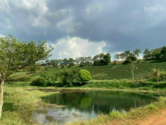 Siêu phẩm ngay Đà Lạt, gần khu nghỉ dưỡng, 350m2 ảnh 0