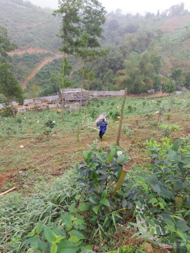 Bán 3,4ha đất rừng sản xuất tại Lương Sơn Hòa Bình giá rẻ đẹp ảnh 0