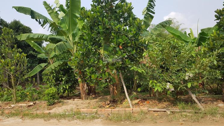 Đất vườn cây ăn trái view sông diện tích hơn 3.800m², MT đường nhựa 5m, giá 16 tỷ ảnh 0
