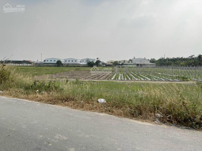 Bán lô đất 50*65m mặt tiền Nguyễn Thị Đành, Hóc Môn. LH 0898425168 ảnh 0