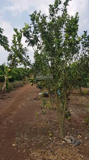 Siêu phẩm đất sào, vườn bưởi, 15m mặt tiền ở Đông Hòa - Trảng Bom - Đồng Nai ảnh 0