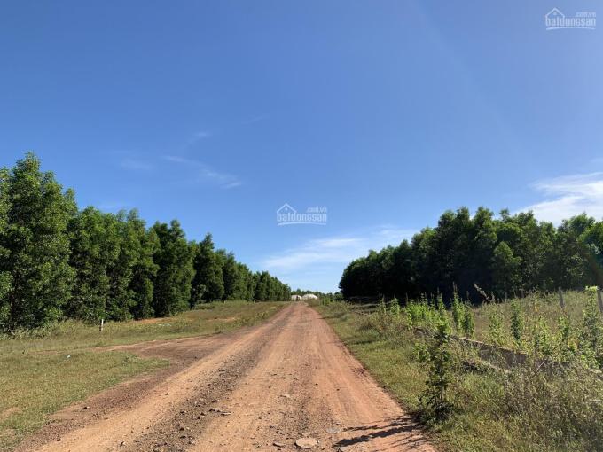 Tôi cần bán lô đất 12.566,7m2 xã Sông Bình, 60.000đ/m2, giá 754,002 tr có sổ sẵn. LH: 0979955769 ảnh 0