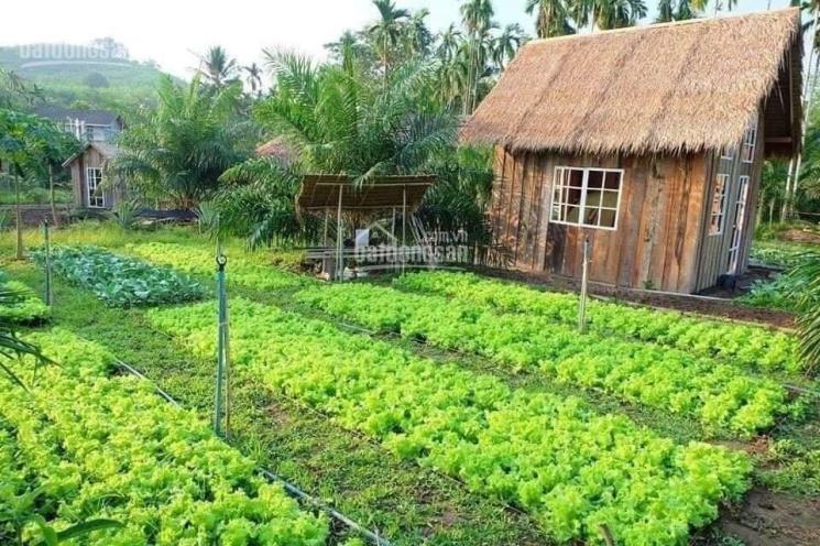 Cần bán 2 lô đất vườn 1000m2 mặt tiền Kênh Phú Hòa Đông ảnh 0