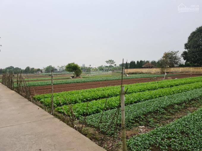 Chính chủ cần bán đất tại khu du lịch sinh thái Hồng Vân, huyện Thường Tín, Hà Nội ảnh 0