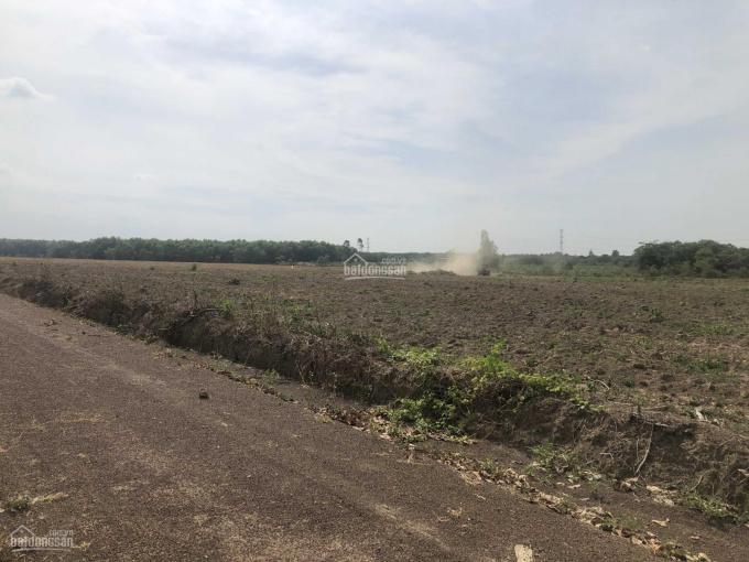Cần bán đất gần chợ Ấp 3, Xuân Hưng, Xuân Lộc, Đông Nai, chỉ 220tr/1000m2, gần KDC, KCN, SHR ảnh 0