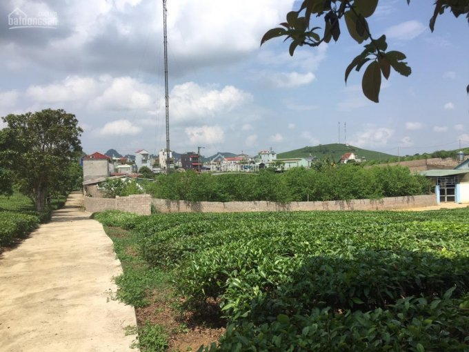 Sở hữu ngay mảnh đất 2100m2 thị trấn Mộc Châu với mức giá rẻ giật mình ảnh 0