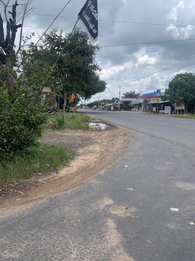 Bán đất thị xã Bình Long - Bình Phước, 1000m2 sổ sẵn chỉ 360 triệu ảnh 0