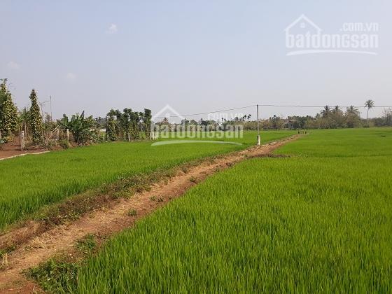 Bán đất ruộng Thôn 4 Xã Ea Pok - Cư Mgar - Đăk Lak BMT diện tích 600m2 - giá 90 triệu 0388 68 0049 ảnh 0