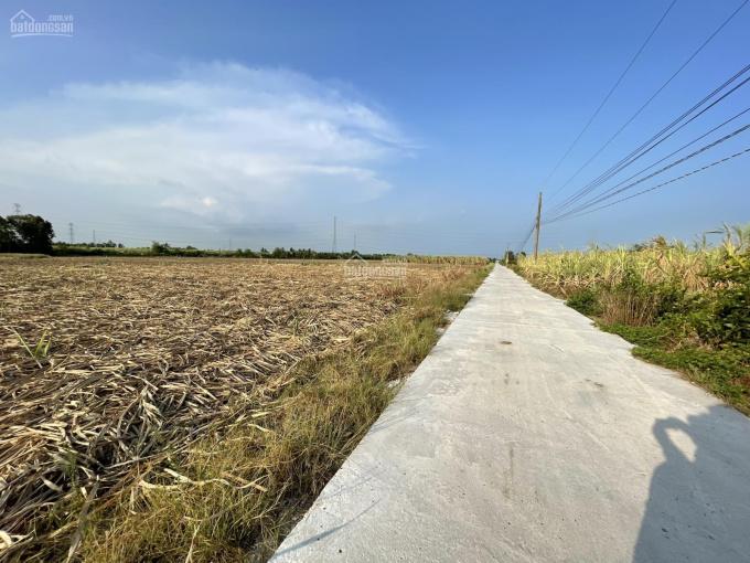 Đất vườn Nhơn Trạch, giá rẻ đầu tư, sổ hồng, đất sạch ảnh 0