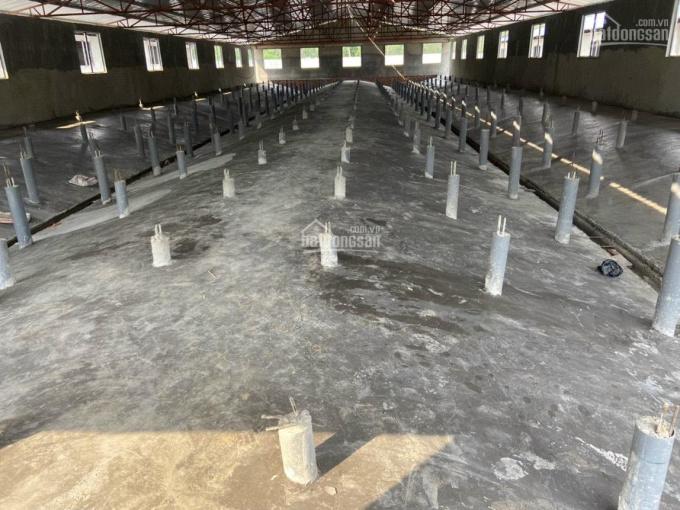 Bán trại heo 600 nái, bao gồm hệ thống chuồng trại. Cách chợ Long Hòa 5km, diện tích tổng 2,7 ha ảnh 0