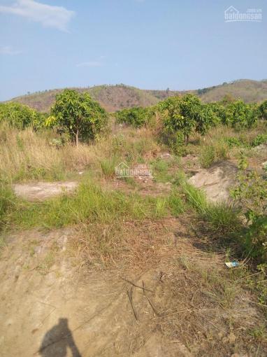 Cần bán đất vàng điện 3 pha, có kênh nước đi qua, diện tích 2 hecta. Thế đất đẹp, giá mềm ảnh 0