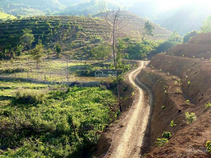 Farm Khánh Sơn Khánh Hòa - 6ha LH 0902095432 ảnh 0