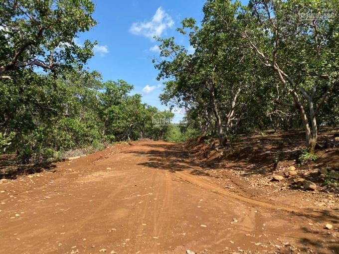 Đất vườn Bình Phước bán 10ha điều đường lớn vào tận nơi giá 600 triệu/ha ảnh 0