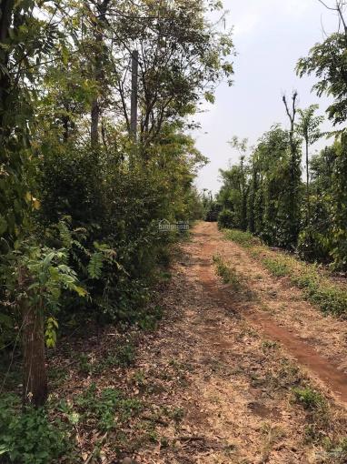 Đất sào Hòa Khánh, Buôn Ma Thuột, Đắk Lắk. Thích hợp đầu tư sinh lời ảnh 0