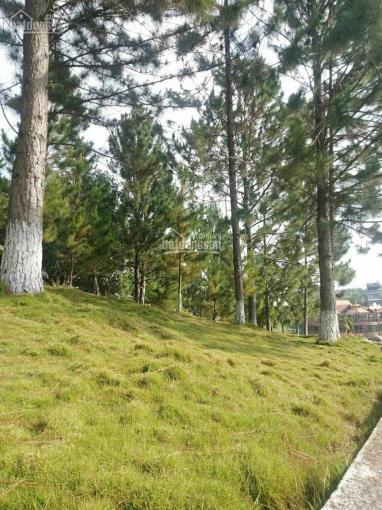 Bán đất Đà Lạt 250m², giá chỉ 3 tỷ 5 ảnh 0