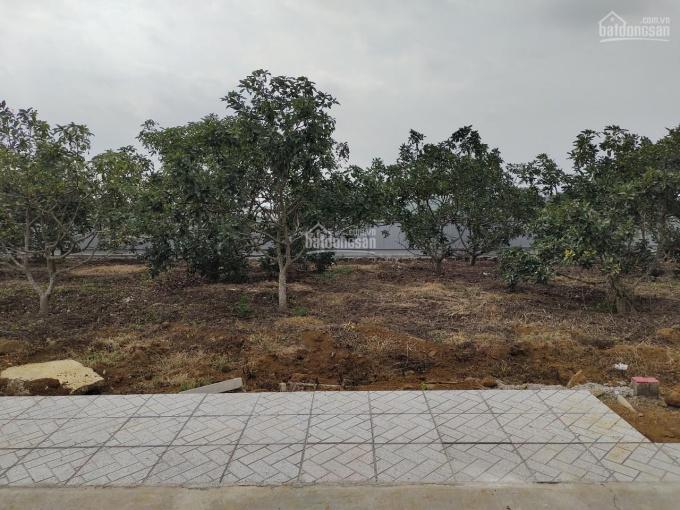Kẹt tiền trả nợ - bán lỗ lô đất giá mềm - Đà Lạt ngay đường Nguyễn An Ninh ảnh 0