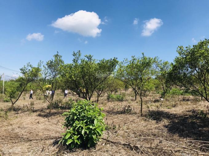 Bán lô đất vườn trái cây 1000m2, đã có sổ, sang tên ngay, giá mùa dịch 510tr (TL), LH 0917397585 ảnh 0