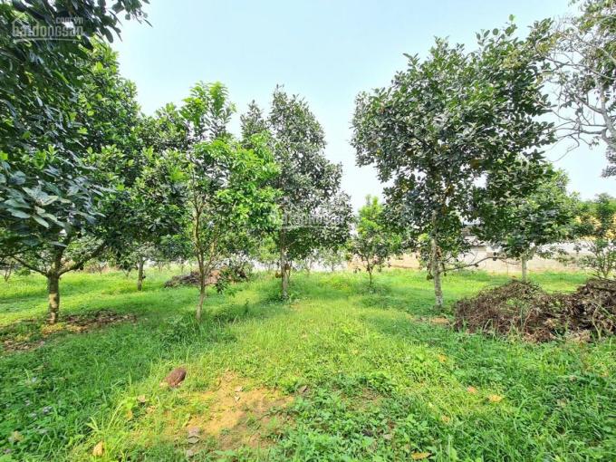 Cần bán 2776m2 đất nghỉ dưỡng Lương Sơn có tới 760m2 đất thổ cư ảnh 0