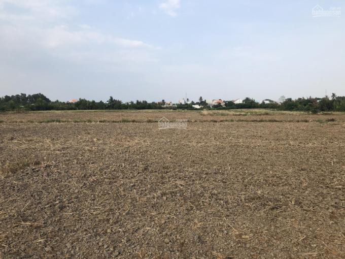 1000m2 xã Phú Hữu xe vào tận đất giá 1,2 tỷ ảnh 0