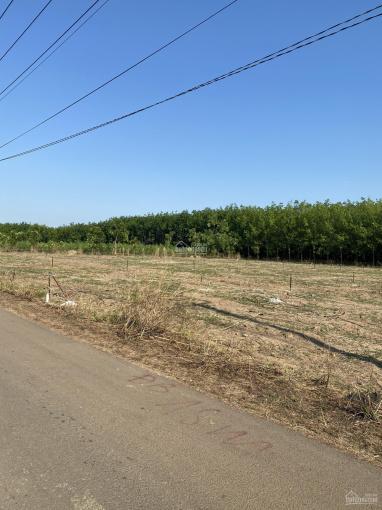 Bấn đất đầu tư ngay UBND và chợ Xuân Thành khu dân cư đông đúc, thích hợp cho các nhà đầu tư ảnh 0