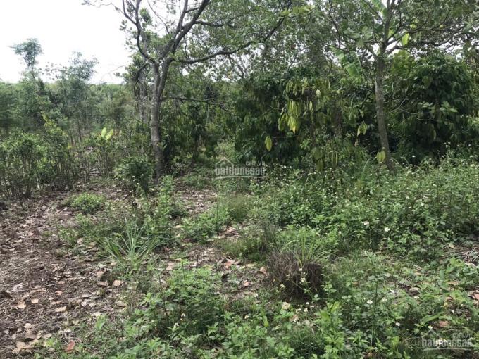 Bán 7000m2 đất nông nghiệp, giá 700tr/sào, Hàng Gòn, Long Khánh, Đồng Nai ảnh 0