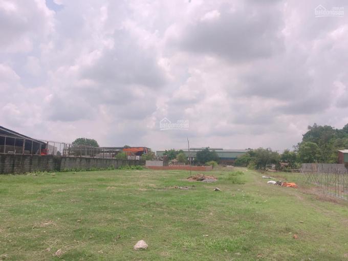Bán đất Nguyễn Thị Đành 6,500m2 có 4,800m2 thổ cư giá 6,5 tr/m2, LH: 0933198277 Đại Phát ảnh 0
