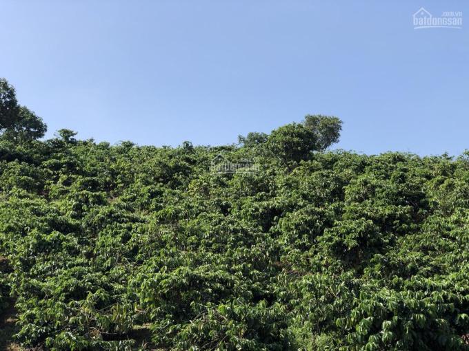Bán 2ha đất tại xã Đăk Nia, Tp. Gia Nghĩa. Liên hệ (chính chủ): 0915114545 ảnh 0