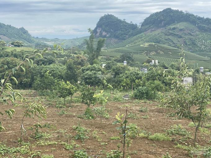 Bán đất Mộc Châu SL. DT 2500m2, giá 2,9tỷ ảnh 0