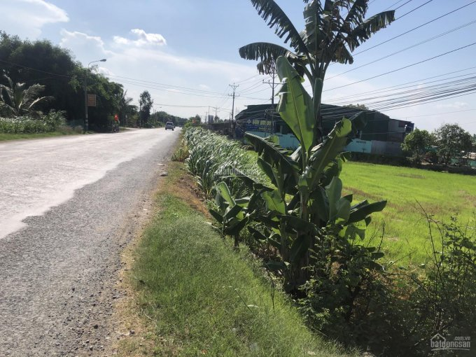 Bán đất mặt tiền QL 62 xã Tân Đông cách Tân An 10km 60m mặt lộ đất xưa giờ chưa qua đầu tư ảnh 0