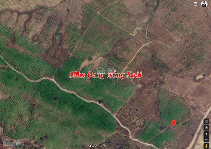 300ha chuyển nhượng dự án trồng rừng tỉnh Đắk Lắk ảnh 0