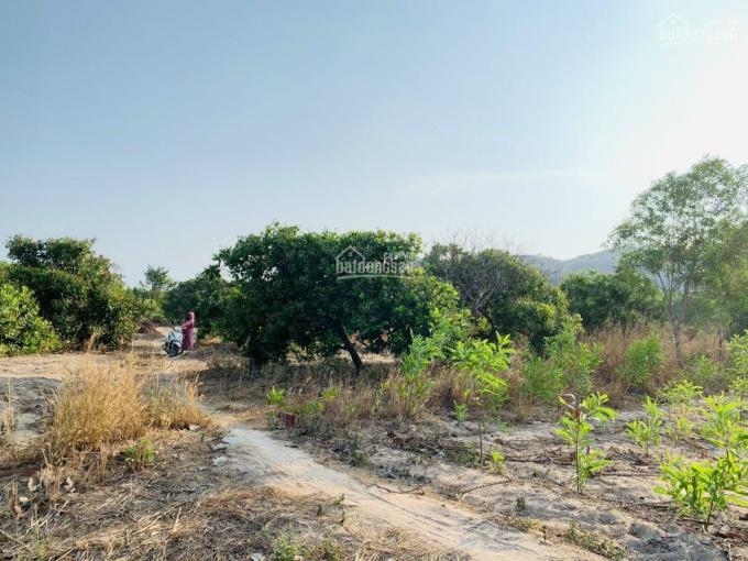 Bán lô đất 2000m2 vườn điều thuộc xã Tam Phước ảnh 0