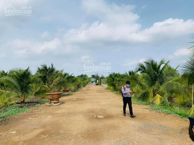 Bán đất vườn đường Lương Ngang Ấp 3, Tân Nhựt, Bình Chánh ảnh 0