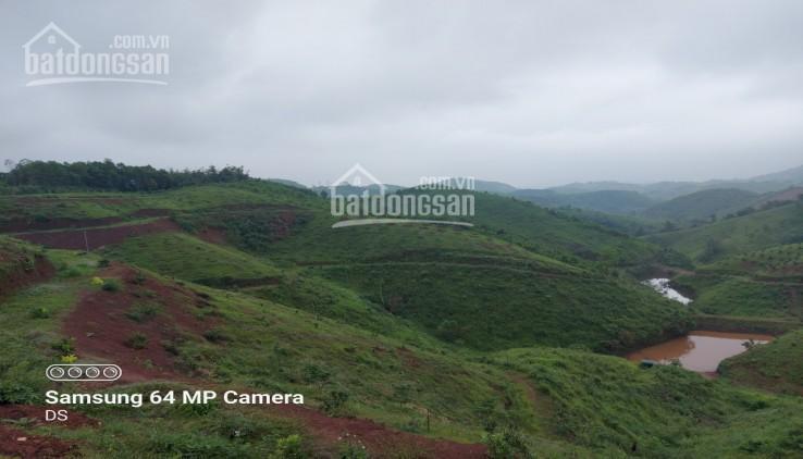 Ngôi nhà nhỏ trên thảo nguyên Tân Lạc 7ha đất rừng sản xuất view cực đỉnh ảnh 0