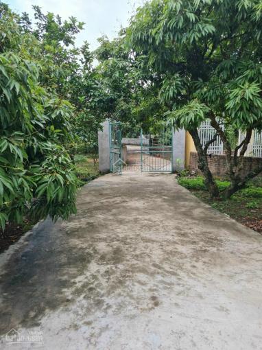 Cần bán mảnh đất 1109m2, tặng nhà cấp 4 đang ở còn đẹp địa chỉ: Nhan Bầu, Thanh Hồng, Thanh Hà ảnh 0