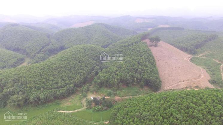 Chuyển nhượng 1,5ha đất, có 400m2 thổ cư tại Yên Thủy, Hòa Bình ảnh 0