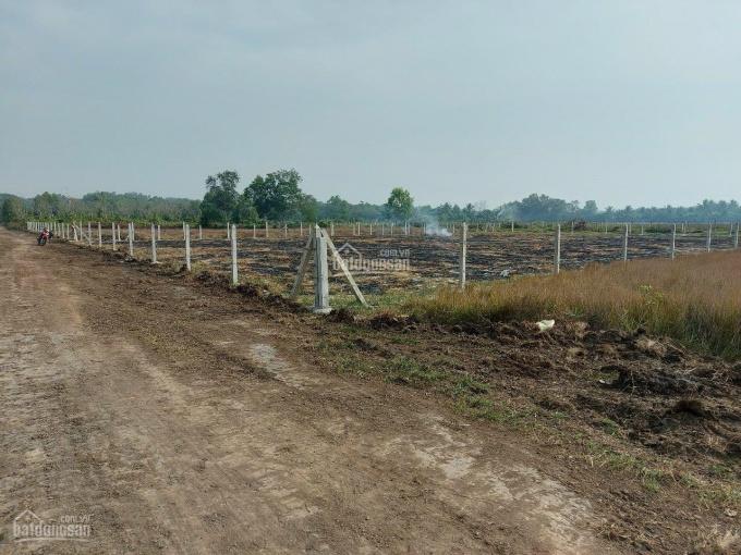 Đất này làm nhà vườn nghỉ dưỡng bao đẹp, DT 50*55m có 300m2 TC giá 2,3 tr/m². LH Thuyền 0937938157 ảnh 0