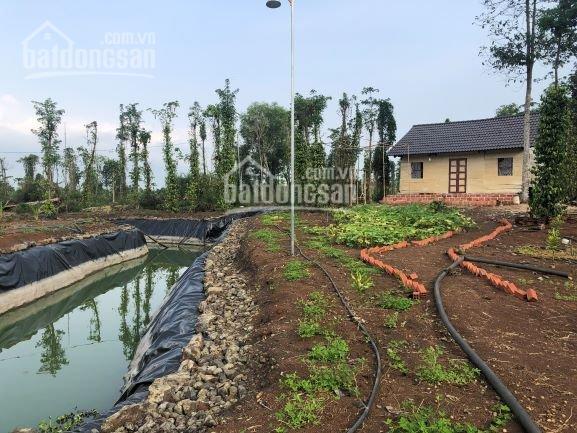 Bán 5,6 sào nhà vườn đẹp view suối, Lâm San, Cẩm Mỹ, giá 380tr/sào
