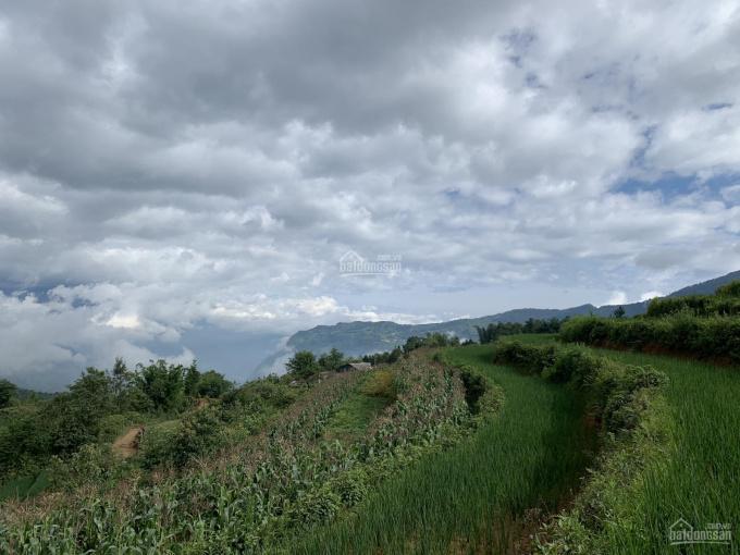 Mảnh đất hơn 6000m2 thôn Mò Phú Chải, Y Tý, Bát Xát, Lào Cai mặt đường 35m ảnh 0