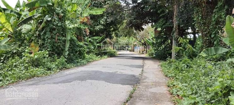 Bán nền 190m2 (7.5x33, cây lâu năm) đường Mai Văn Khải, xã Mỹ Ngãi, TP Cao Lãnh ảnh 0