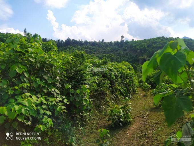 Bán hơn 7ha đất rừng sản xuất Tân Lạc giá rẻ, ngay quốc lộ ảnh 0