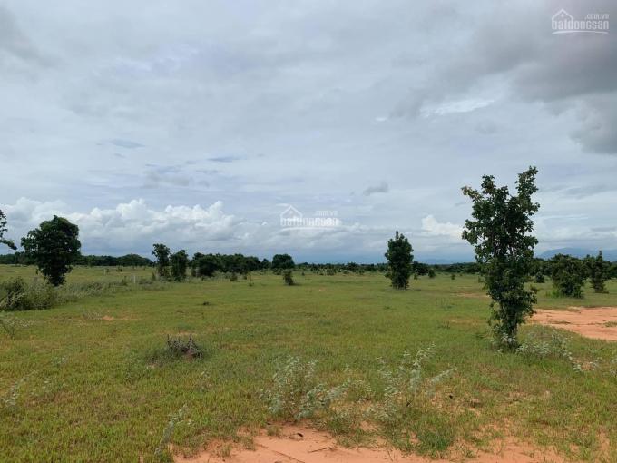 Đất xã Hòa Thắng gần khu du lịch Bàu Trắng, chỉ 1.3 tỷ/10.000m2 - thể hiện đường trên sổ, SHR ảnh 0