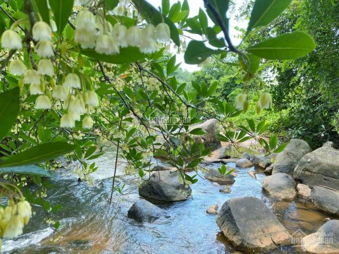 Đất La Ngà trên đất có sẵn vườn cây ăn trái, 480 triệu/xào ảnh 0