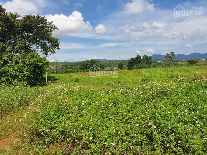 Bán đất sào 3000m2 tại xã Đông Hòa, Trảng Bom, có sổ riêng công chứng liền ảnh 0